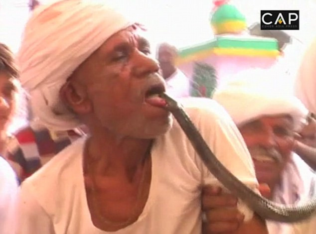 Ông Rakha tình nguyện để cho rắn hổ mang cắn vào lưỡi mình.