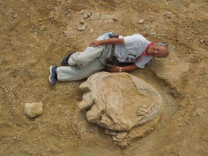 Dấu chân khủng long khổng lồ.