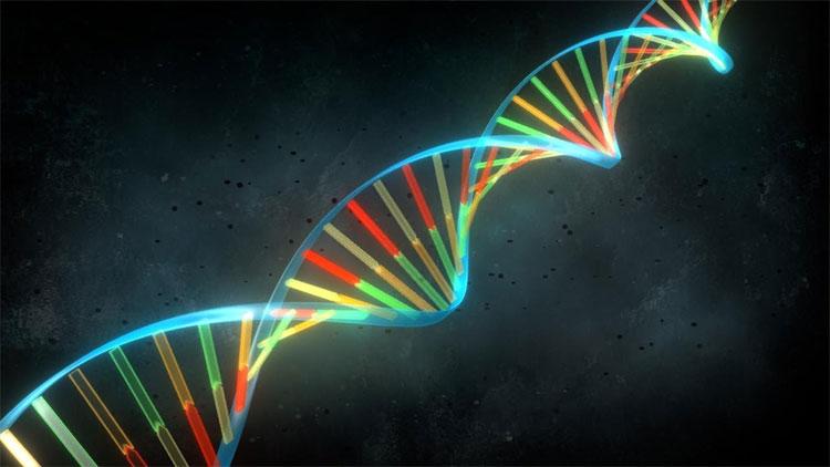 Mã vạch DNA đã đơn giản hóa quá mức công việc của nhà phân loại.