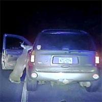 Video: Hươu bị đâm tức giận tấn công trả thù tài xế