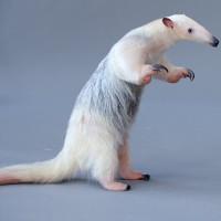 Loài thú có móng vuốt khỏe đập vỡ băng đá và bốc mùi gấp 4 lần chồn hôi