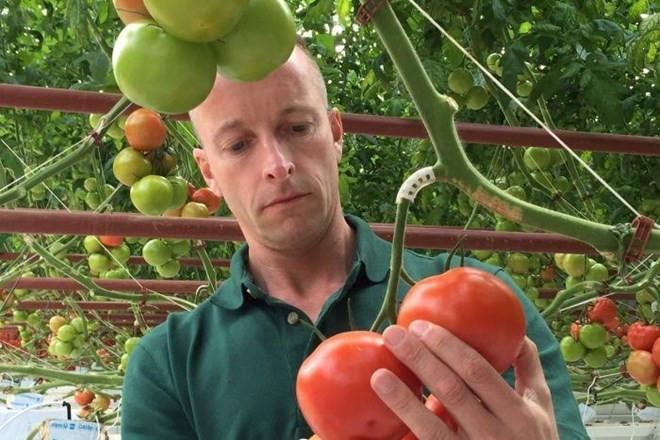 Nhà trồng cà chua nhiều kinh nghiệm Adrian Simkins cho biết đây là dự án hàng đầu thế giới.