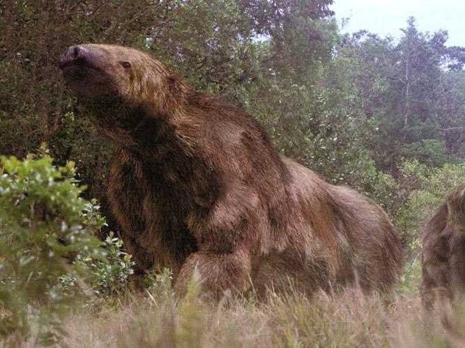 Megatherium được cho là một trong những loài thú to lớn nhất sống trên mặt đất