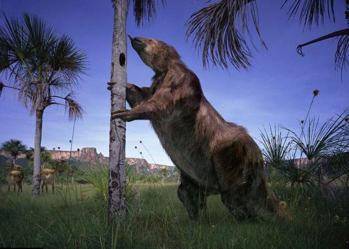 Bộ vuốt sắc và dài của Megatherium như những con dao găm cực kỳ nguy hiểm.