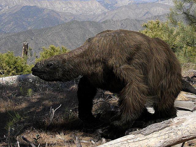 Megatherium sinh sống trong các khu vực rừng thưa của Nam Mỹ