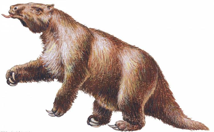 Megatherium còn được gọi là lười đất khổng lồ
