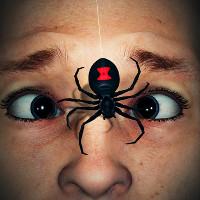 Video: Sẽ ra sao nếu bị loài nhện tàn độc nhất thế giới cắn?