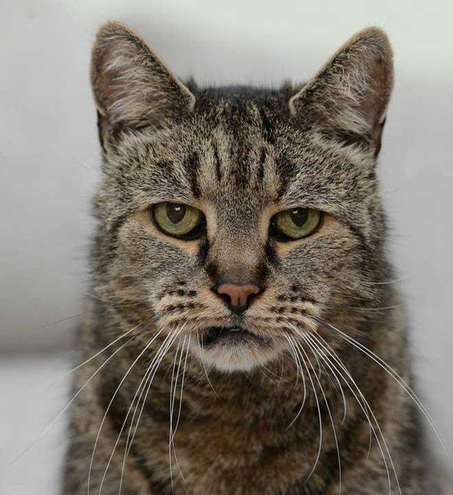 Nếu mèo Nutmeg có tuổi thọ chính xác là 31 tuổi thì nó sẽ trở thành chú mèo có tuổi thọ cao nhất thế giới còn sống.