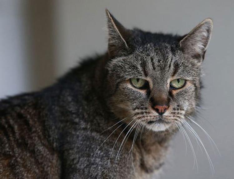 Tuy vậy, để có thể được sách kỷ lục Guinness thế giới công nhận là chú mèo có tuổi thọ cao nhất còn sống thì mèo Nutmeg cần phải được các nhà khoa học xét nghiệm.