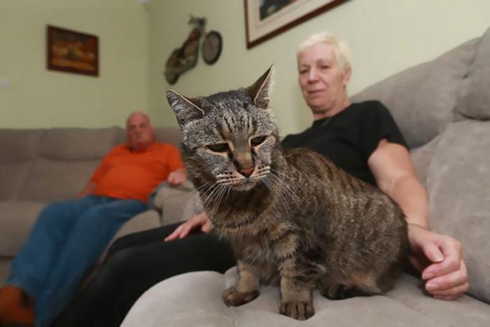 Hiện tại, mèo Nutmeg vẫn đang sống rất khỏe mạnh.