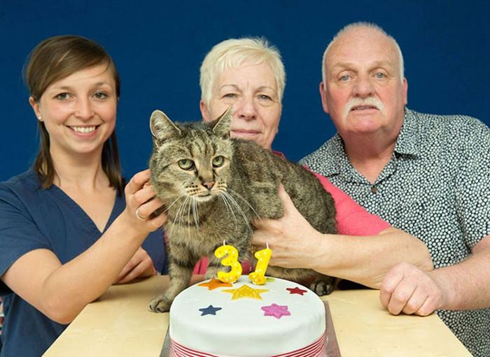 Mèo Nutmeg được gia đình Liz và Ian chăm sóc rất chu đáo.