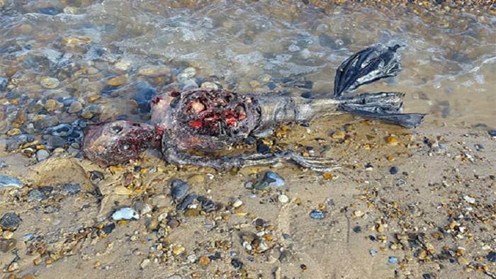 Nhiều người cho rằng đây là xác người được quấn phần chân trong túi nilon.