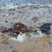 """Phát hiện thi thể đẫm máu của """"nàng tiên cá"""" trên bãi biển Anh"""
