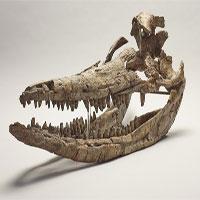 """Hóa thạch """"rồng biển"""" thống trị đại dương kỷ Jura"""