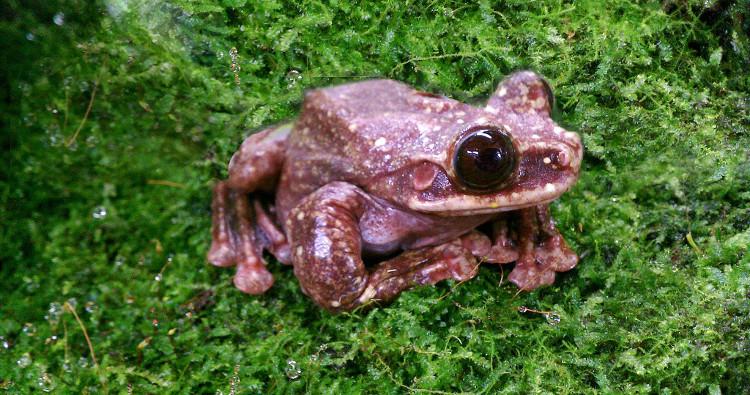 Chú ếch Rabbs cuối cùng.
