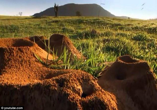 Những tổ kiến bên trên mặt đất.
