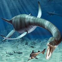 Chàng trai hì hục 2 năm khôi phục hóa thạch xà đầu long 200 triệu tuổi