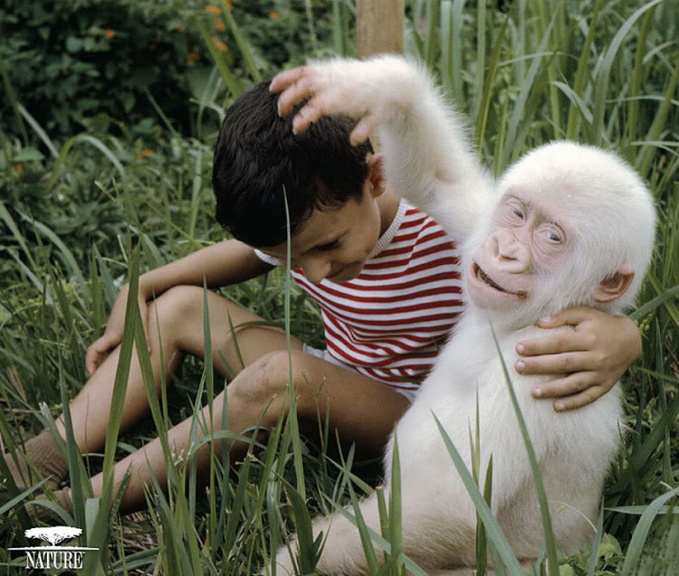 Một chú khỉ bị bệnh bạch tạng.