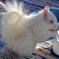 Ấn tượng trước những hình ảnh động vật bị bệnh bạch tạng
