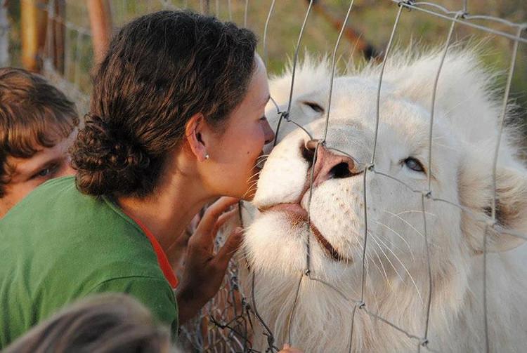 Chú sư tử trắng làm cho chúng ta liên tưởng đến những động vật trong truyện cổ tích hay trong truyền thuyết.