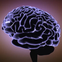 Oestrogen làm não phụ nữ lớn hơn?