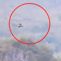Video: Sinh vật nghi là rồng bay trên đỉnh núi Trung Quốc