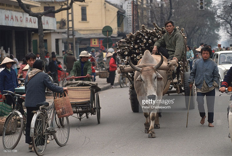 Một chiếc xe bò trên phố Lê Duẩn, gần chợ Cửa Nam.