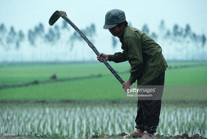 Cậu bé nông dân trên cánh đồng ngoại ô Hà Nội.
