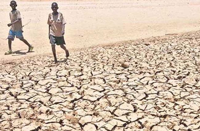 Kể từ giữa tháng 7/2011, các nước ở vùng Sừng Châu Phi như Kenya, Somalia, Ethipoa và Djibouti đã lâm vào cuộc khủng hoảng lương thực