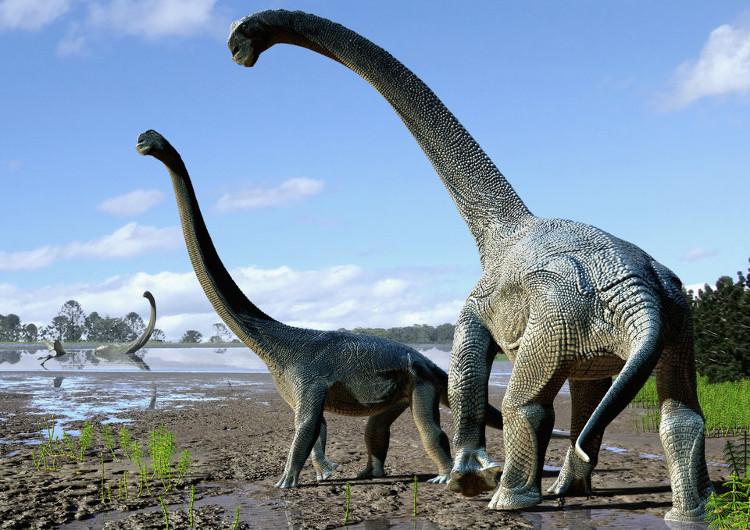 Đồ họa mô tả khủng long Savannasaurus elliottorum dựa trên hóa thạch thu được.
