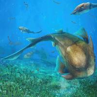 Quai hàm con người tiến hóa từ loài cá cổ đại