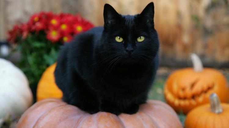 Mèo đen được cho là loài vật không may mắn