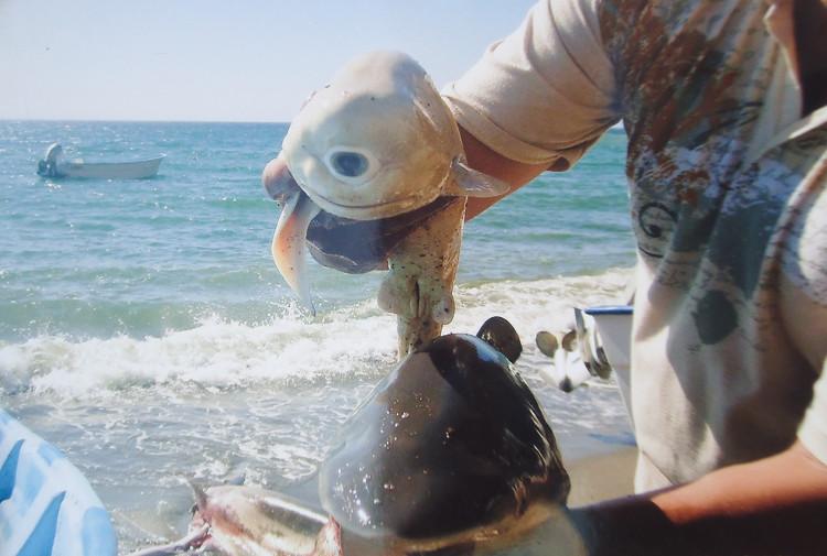 Đây chính là con cá mập một mắt được đưa tin trên National Geographic vào tháng 10/2011.