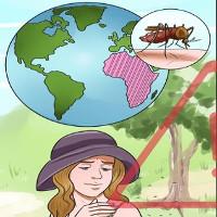 Cách chẩn đoán, điều trị và dự phòng bệnh sốt rét