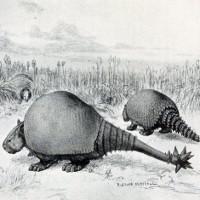 Phát hiện hóa thạch 3,5 triệu năm của tê tê tại Argentina