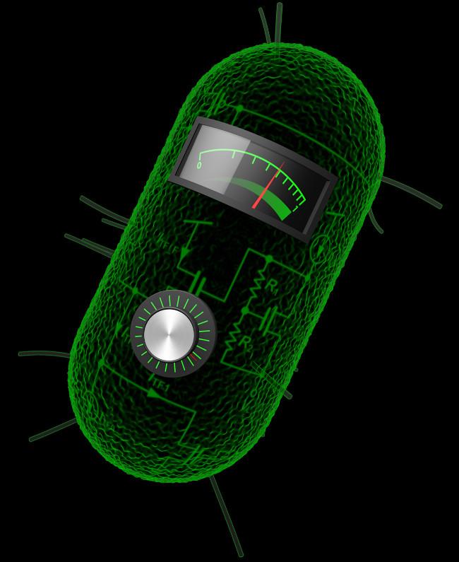 Nay khi tồn tại gắn liền với máy tính, đây lần đầu tiên vi khuẩn tích cực tham gia vào thí nghiệm.