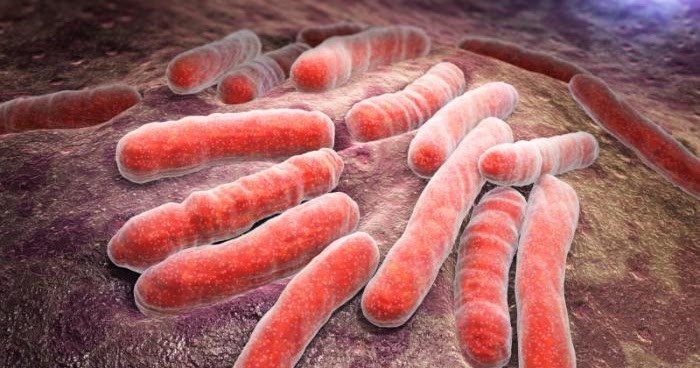 Khuẩn lao - căn bệnh khiến 1,8 triệu người chết mỗi năm.