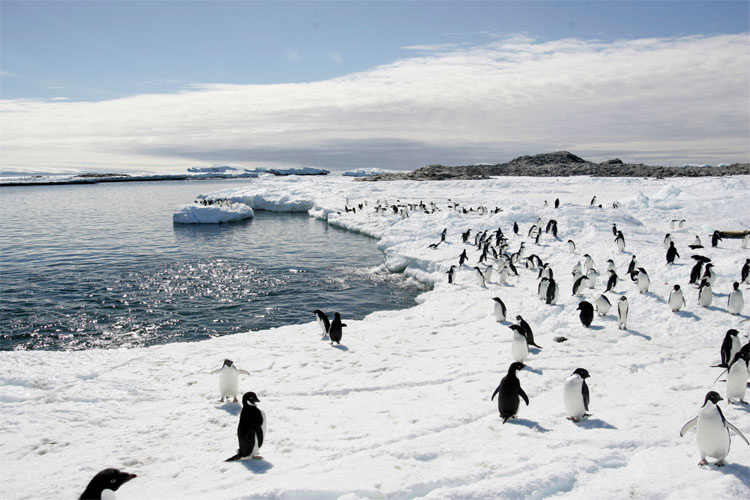 There will be the world's largest marine reserve in Antarctica