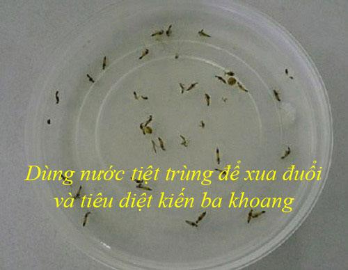 Dùng nước tiệt trùng để xua đuổi kiến ba khoang