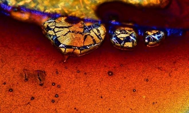 Chất kết tinh từ cà phê được chụp bởi Vin Kitayama