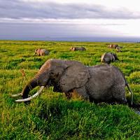 Động vật đã giảm hơn 1 nửa từ năm 1970, đợt đại tuyệt chủng mới sắp tới?