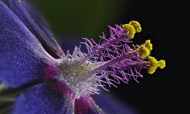 Nhị của một bông hoa dại