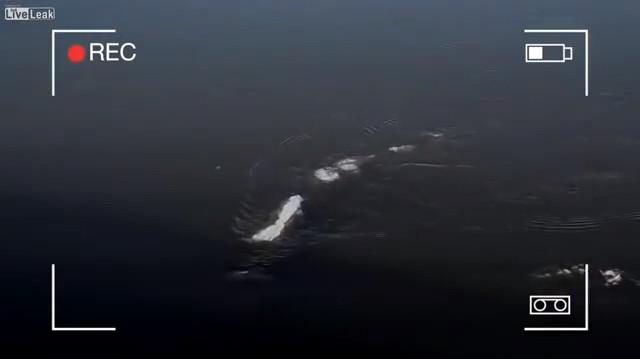 Sinh vật biển ẩn hiện dưới làn nước sông Alaska.