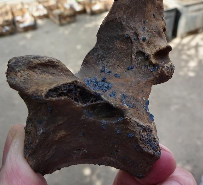 Hình ảnh của khoáng vật vivianite trên một mẩu xương được chôn vùi trong cát.