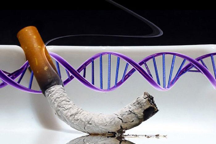 Hút thuốc gây ra đột biến gene ở mức độ cao.