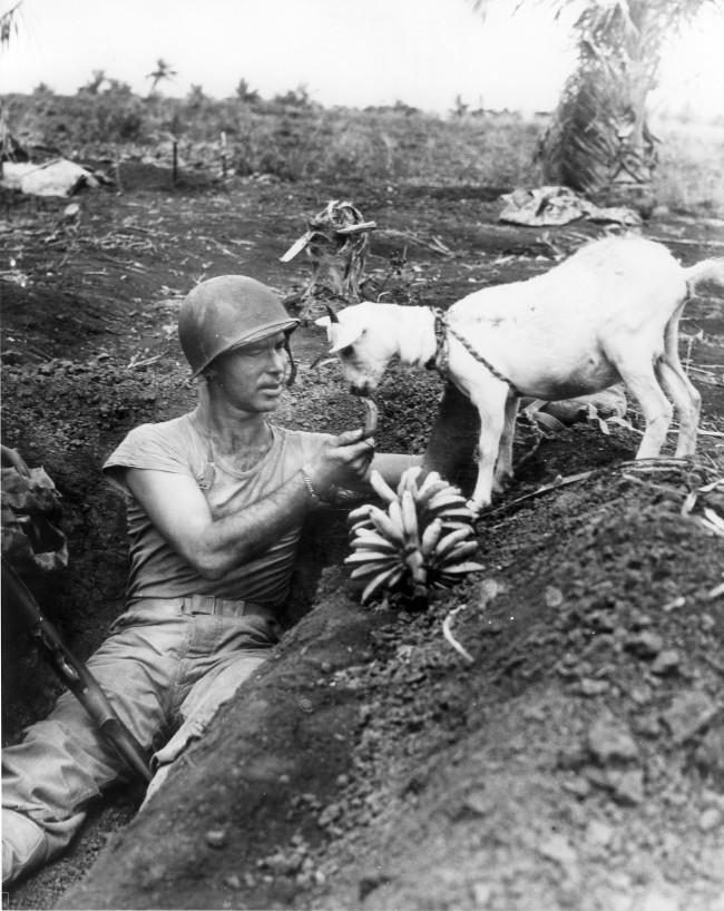 Một người lính Mỹ cho cừu ăn trong cuộc chiến lịch sử trên đảo Saipan với quân Nhật vào năm 1944.