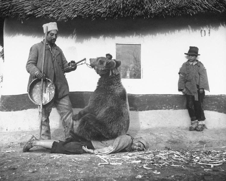 Bức ảnh lịch sử cách đây hơn 70 năm khi người ta dùng gấu để chữa bệnh đau lưng ở Romania.