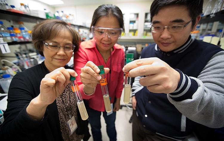 Các nhà khoa học tại NREL đang cầm ống nghiệm chứa vi khuẩn Clostridium thermocellum