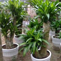 Phát hiện 3 loài cây giúp hấp thu khí độc trong nhà