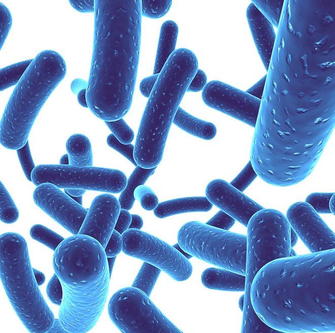 Lợi khuẩn probiotic